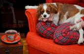 Lady relaxing with her dog (Cavalier King Charles spaniel) by th
