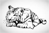 Small white tiger illustration vector illustration - hand drawing tiger