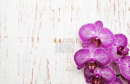 Photo pour Fleurs d'orchidées sur fond blanc en bois ancien - image libre de droit