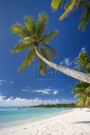 Dominican Republic, Beach on Saona island