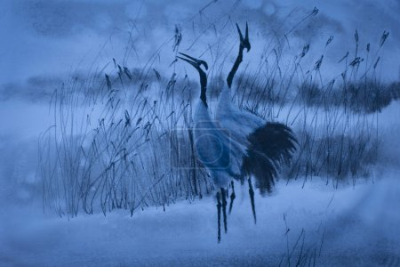 Photo for Dance of the cranes in the reeds in the winter - Royalty Free Image