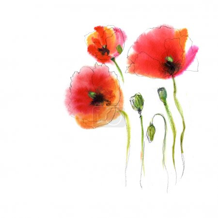 Colorful poppy flowers, watercolor design