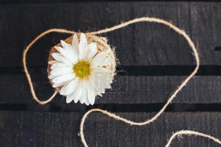 Single flower on a black background