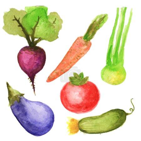 Illustration pour Set de légumes vecteur aquarelle dessiné à la main - image libre de droit