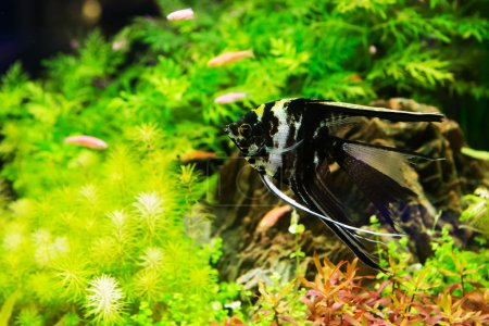 A green beautiful planted tropical freshwater aquarium with fish