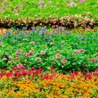 Colourful Flowerbeds...