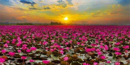 Photo pour Coucher de soleil en mer Lotus rouge - image libre de droit