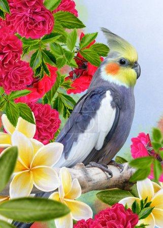 Photo for Bird parrot corella and white flowers plumeria, frangipani - Royalty Free Image