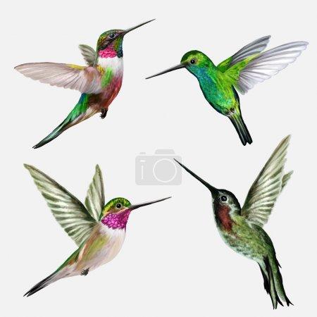 Illustration for Set four small bird hummingbird, vector illustration - Royalty Free Image