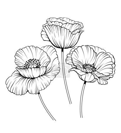 Line poppies vector set 01