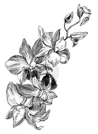 Photo pour Fleur d'orchidée décorative. Illustration monochrome en noir et blanc dessinée à la main botanique pour cartes de vœux, invitations et autres projets d'impression isolés sur fond blanc . - image libre de droit