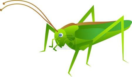 Illustration of a green cricket...