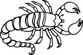 Illustration of a black and white line drawing of a scorpion