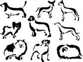 Illustration of a set of pedigree dogs including a basset hound pug chihuahua newfoundland greyhound great dane beagle pomeranian and a papilon