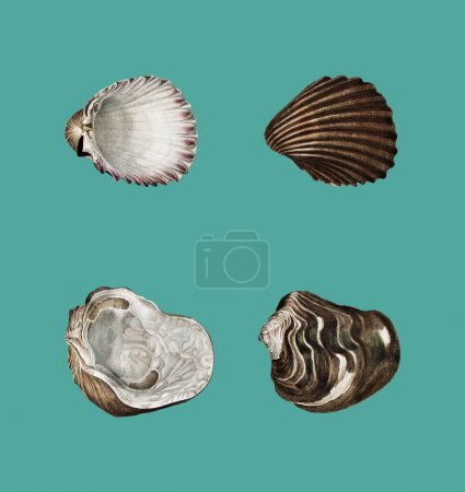 Photo for Different types of mollusks illustrated by Charles Dessalines D'Orbigny (1806-1876).Digitally enhanced from our own 1892 edition of Dictionnaire Universel D'histoire Naturelle. - Royalty Free Image