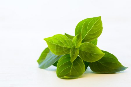 Photo for Fresh basil leaves isolated on white - Royalty Free Image