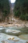 Winter landscape in the western Ukrainian Carpathians