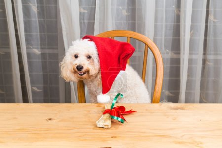 Concept of excited dog on Santa hat with Christmas present on ta