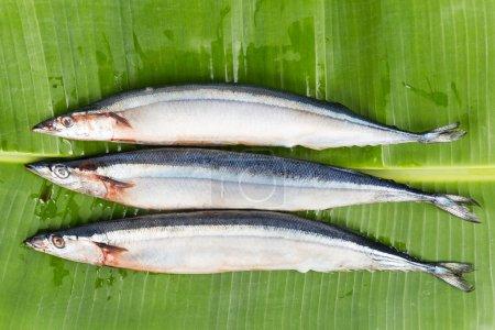 frischer japanischer Sanma-Fisch, nur zu bestimmten Jahreszeiten erhältlich
