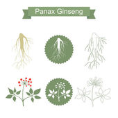 Ginseng Isolated plant on white background
