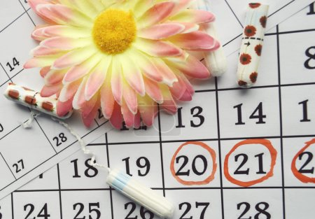 Menstruation calendar with cotton tampons and orange gerbera