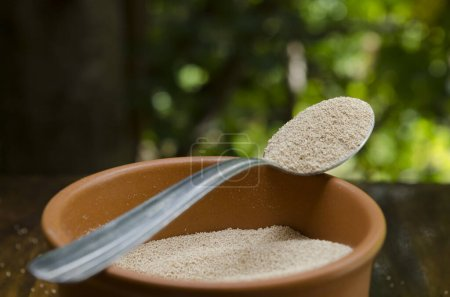 dry yeast in grain in spoon on ceramic cup on wood and natural background. Healthy food
