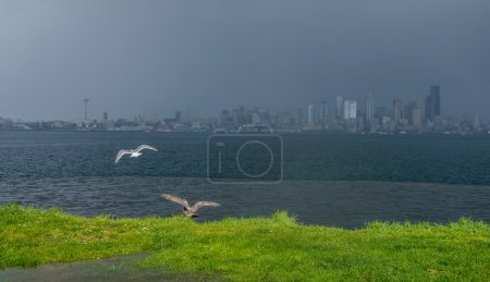 Birds And Seattle Skyline
