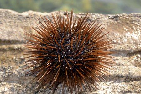 Sea urchin detail...