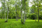 Beautiful lush and green wooded meadow during summer in Estonian countryside, Northern Europe.