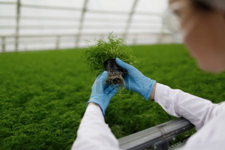 Quality control. Senior scientist or tech observes new breed of cress sprouts optimized for consumption in greenhouse