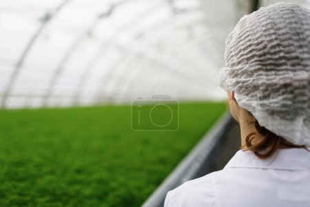Junior agricultural scientists researching plants and diseases in a greenhouse with parsley