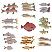 set of different fish flat style