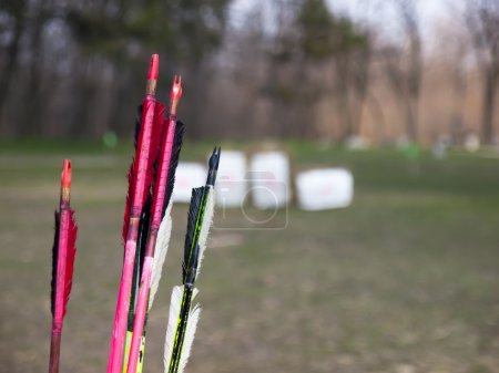the arrows order bow