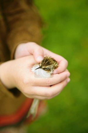 Little bird in child's hand