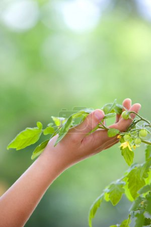 Human hand taking care of plant