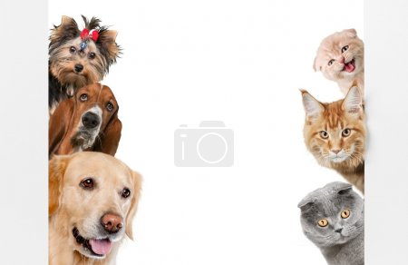 Group of dogs on white background...