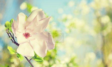 Photo pour Au début du printemps sur fond de fleurs - image libre de droit
