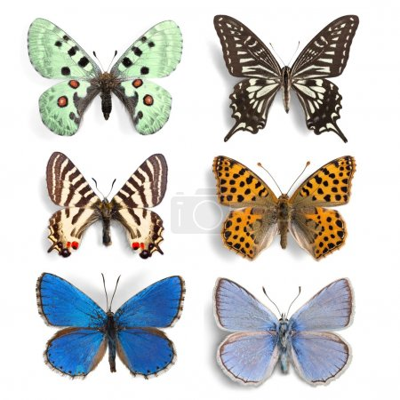 insects Butterflies collection set