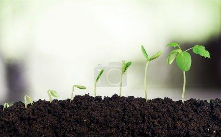 Foto de Crecimiento de la nueva vida en el fondo - Imagen libre de derechos