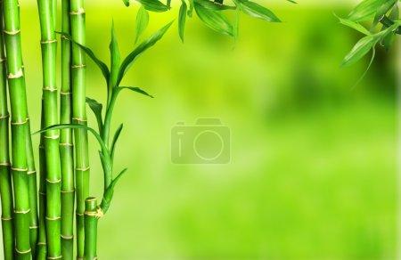 Photo for Many bamboo stalks  on background - Royalty Free Image