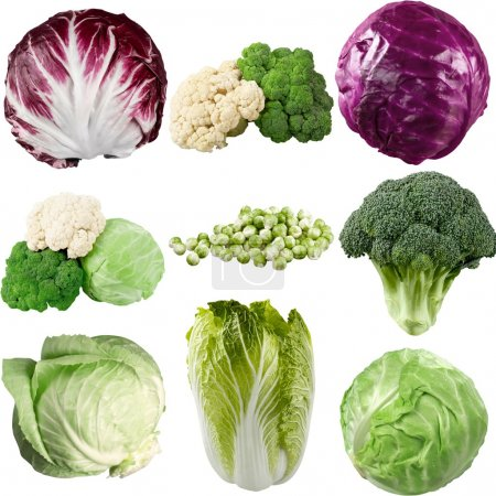 Photo for Various types of cabbage isolated on white background - Royalty Free Image