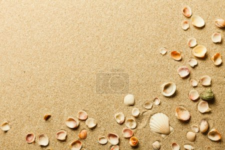 Shells in the sand on the beach
