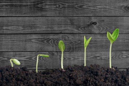 crecimiento de una nueva vida