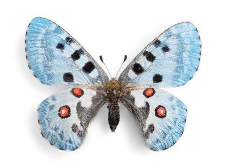 cute  butterfly  animal
