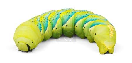close up of the caterpillar