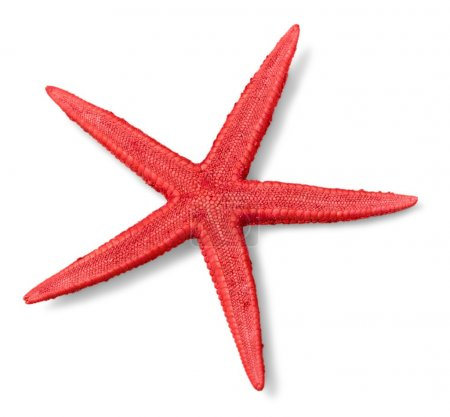 red starfish isolated