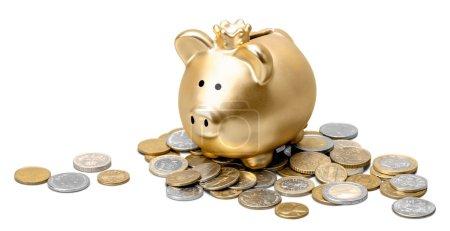 golden piggy bank and coins