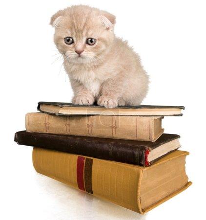 Cute Kitten on books