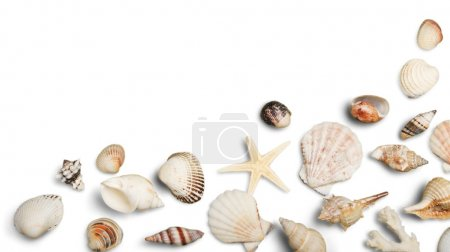 Photo for Close up of ocean shells isolated on white background - Royalty Free Image