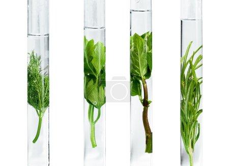 Herbal in test tubes.